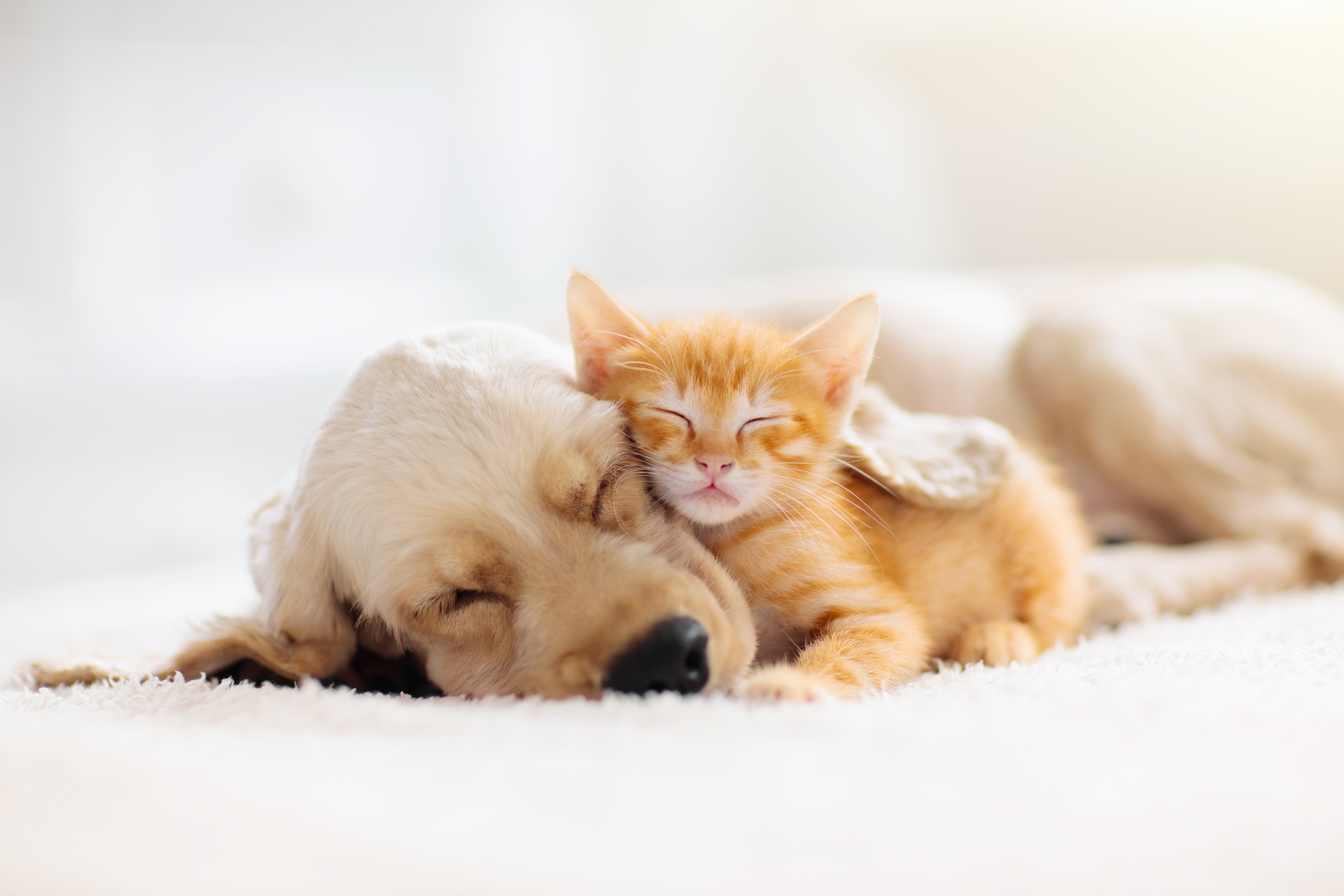 Pets & Alarm Systems - Can They Coexist?